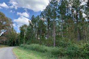 CR 4 Trophy Timber & Hunting Tract in Marengo, AL (7 of 8)