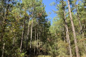 The Blue Rock Road Tract - Marengo County AL