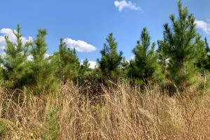 Popular Road Timber & Hunting Tract in Choctaw, AL (2 of 6)
