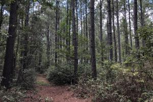 Firetower Rd Wooded Recreational Homesite (Parcel 1) - Jasper County SC