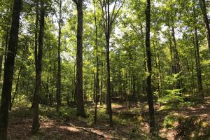 Highway 11 Hardwood Hunting Land in Jasper, GA (2 of 46)