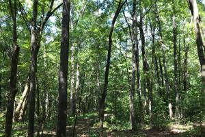 Highway 11 Hardwood Hunting Land in Jasper, GA (14 of 46)