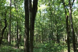Highway 11 Hardwood Hunting Land in Jasper, GA (40 of 46)