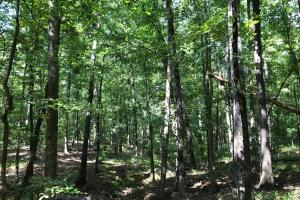 Highway 11 Hardwood Hunting Land in Jasper, GA (18 of 46)