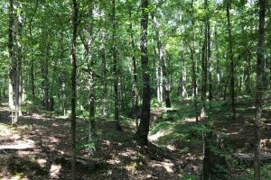 Highway 11 Hardwood Hunting Land in Jasper, GA (12 of 46)