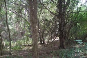 82+ Acre Recreational/Residential/Hunting Land off Hwy 27 in Floyd, GA (10 of 14)