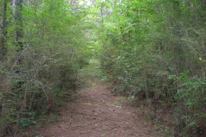 82+ Acre Recreational/Residential/Hunting Land off Hwy 27 in Floyd, GA (7 of 14)