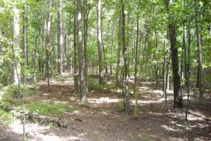 82+ Acre Recreational/Residential/Hunting Land off Hwy 27 in Floyd, GA (11 of 14)