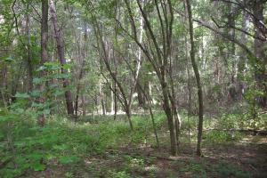 82+ Acre Recreational/Residential/Hunting Land off Hwy 27 in Floyd, GA (13 of 14)