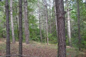 82+ Acre Recreational/Residential/Hunting Land off Hwy 27 in Floyd, GA (8 of 14)