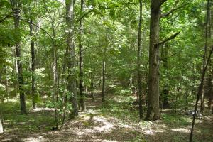 82+ Acre Recreational/Residential/Hunting Land off Hwy 27 in Floyd, GA (9 of 14)