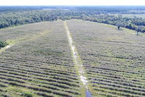 Glynn County Blueberry Farm - Glynn County GA