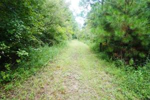Colwell Creek Hunting & Timber Tract in Hale, AL (7 of 18)