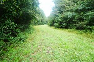 Colwell Creek Hunting & Timber Tract in Hale, AL (3 of 18)