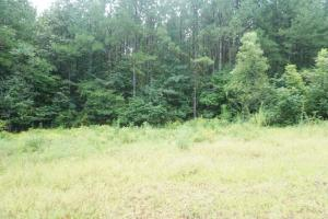 Colwell Creek Hunting & Timber Tract in Hale, AL (8 of 18)