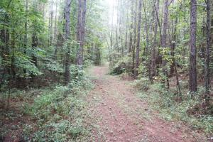 Colwell Creek Hunting & Timber Tract in Hale, AL (2 of 18)