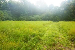 Colwell Creek Hunting & Timber Tract in Hale, AL (14 of 18)