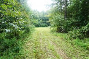 Colwell Creek Hunting & Timber Tract in Hale, AL (4 of 18)