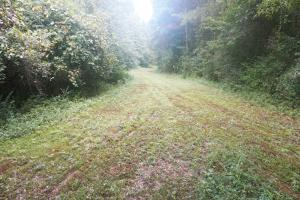 Colwell Creek Hunting & Timber Tract in Hale, AL (12 of 18)