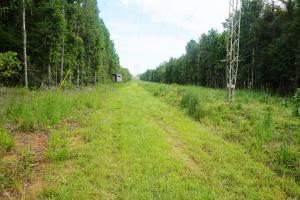 Colwell Creek Hunting & Timber Tract in Hale, AL (6 of 18)