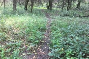 Howard County, Nebraska recreational tract for sale. Multiple deer trails throughout.  (2 of 22)
