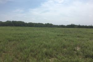 Howard County, Nebraska hunting land for sale. Plenty of areas for food plots.  (3 of 22)