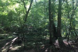 Yellowleaf Creek Homesites & Timber in Shelby, AL (12 of 39)