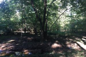 Yellowleaf Creek Homesites & Timber in Shelby, AL (34 of 39)