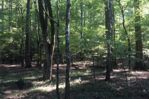 Yellowleaf Creek Homesites & Timber in Shelby, AL (25 of 39)