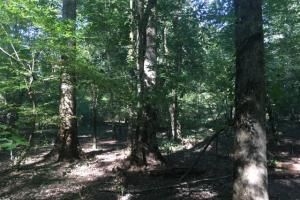 Yellowleaf Creek Homesites & Timber in Shelby, AL (35 of 39)