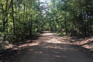 Yellowleaf Creek Homesites & Timber in Shelby, AL (11 of 39)