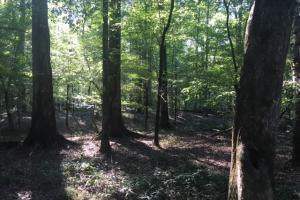 Yellowleaf Creek Homesites & Timber in Shelby, AL (29 of 39)