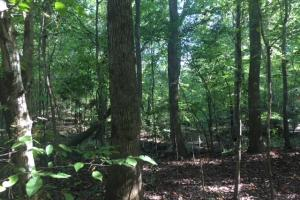 Yellowleaf Creek Homesites & Timber in Shelby, AL (6 of 39)