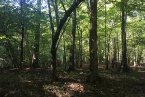 Yellowleaf Creek Homesites & Timber in Shelby, AL (36 of 39)