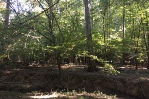 Yellowleaf Creek Homesites & Timber in Shelby, AL (24 of 39)