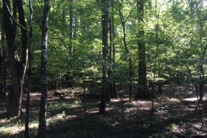 Yellowleaf Creek Homesites & Timber in Shelby, AL (27 of 39)