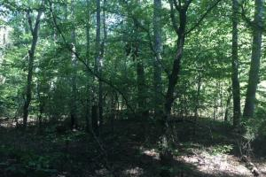 Yellowleaf Creek Homesites & Timber in Shelby, AL (15 of 39)