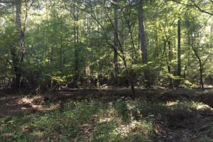 Yellowleaf Creek Homesites & Timber in Shelby, AL (18 of 39)