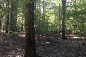 Yellowleaf Creek Homesites & Timber in Shelby, AL (28 of 39)