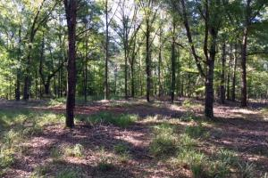 Historic Longshadow Farm Hunting Recreation Tract in Schley, GA (22 of 34)