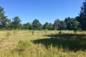 Historic Longshadow Farm Hunting Recreation Tract in Schley, GA (32 of 34)