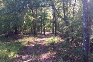 Historic Longshadow Farm Hunting Recreation Tract in Schley, GA (34 of 34)
