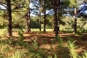 Historic Longshadow Farm Hunting Recreation Tract in Schley, GA (10 of 34)