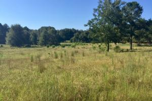 Historic Longshadow Farm Hunting Recreation Tract in Schley, GA (33 of 34)
