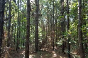 Northwest Coffee Timber Tract - Coffee County AL