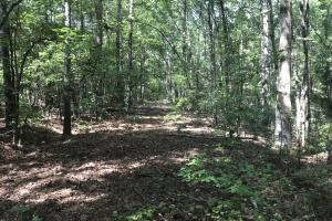 Liberty 29-Acre Recreational Property in Pickens, SC (7 of 18)