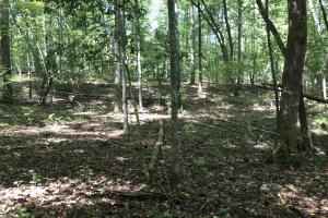 Liberty 29-Acre Recreational Property in Pickens, SC (16 of 18)