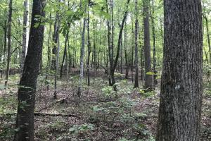 Liberty 29-Acre Recreational Property in Pickens, SC (10 of 18)