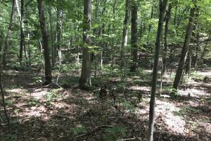 Liberty 29-Acre Recreational Property in Pickens, SC (11 of 18)