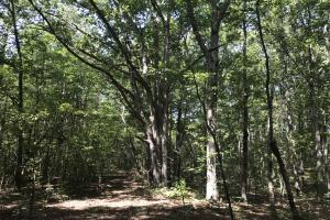 Liberty 29-Acre Recreational Property